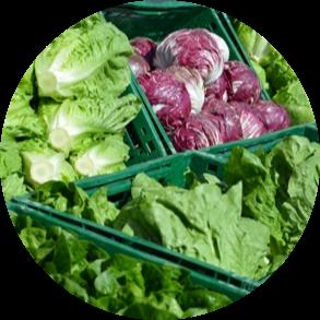 Salotų Ūkis | Produkcija